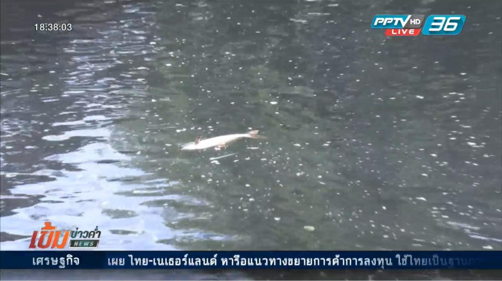 ตรวจสอบสาเหตุน้ำเน่าเสีย-ปลาตาย คลองรังสิตฯ