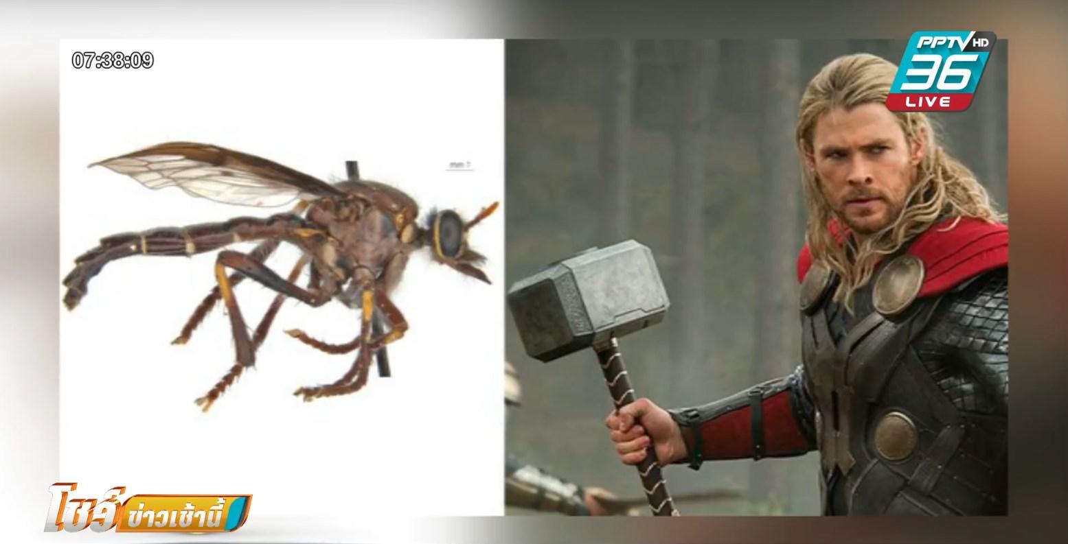 นักวิทย์ ตั้งชื่อ 5 แมลงวันสายพันธุ์ใหม่ ตามซูเปอร์ฮีโร่