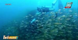 เผยภาพ ความสวยงามใต้ท้องทะเลกระบี่