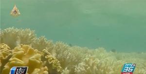 """เผย ปะการังเกิดใหม่ใน """"เกรท แบร์ริเออร์ รีฟ"""" ลดลง"""