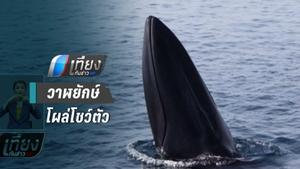 ตื่นตา! วาฬยักษ์ โผล่โชว์ตัวข้างเรือนักท่องเที่ยว จ.พังงา