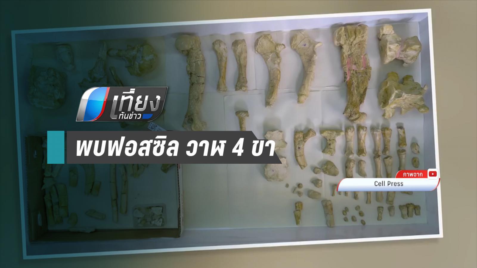 พบฟอสซิล วาฬ 4 ขา อายุ 43 ล้านปี