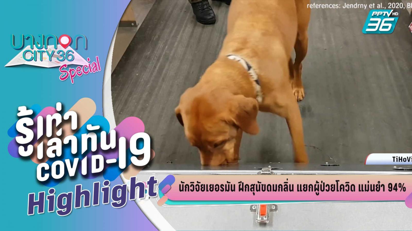 บางกอกซิตี้ เลขที่ 36 | นักวิจัยเยอรมัน ฝึกสุนัขดมแยกผู้ป่วยโควิด แม่นยำ 94% |  PPTV HD 36