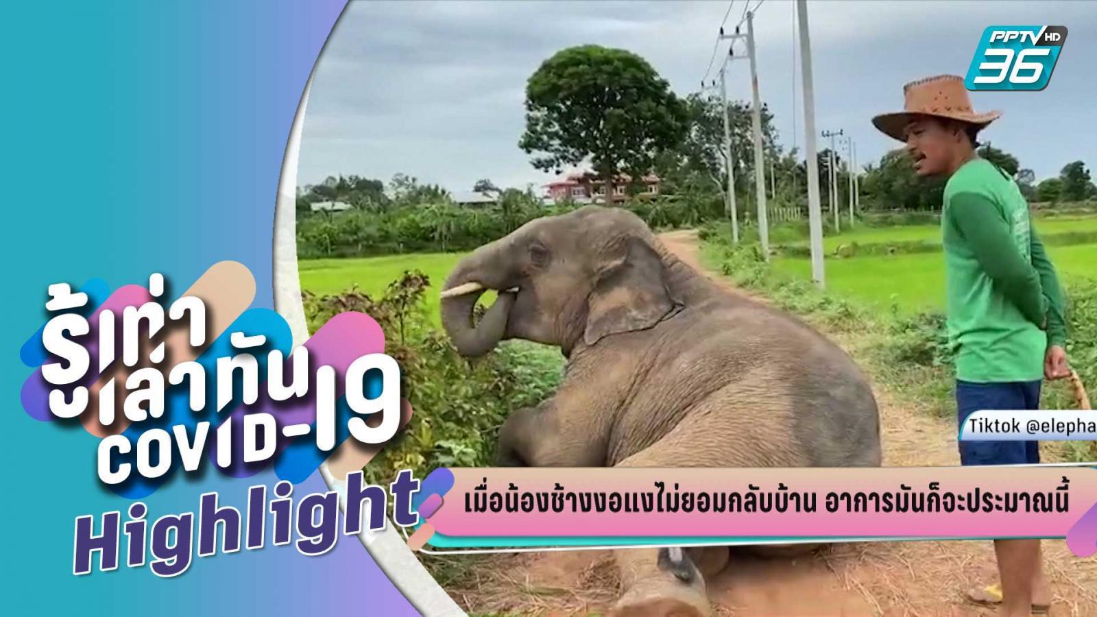 บางกอกซิตี้ เลขที่ 36 | เมื่อน้องช้างงอแงไม่ยอมกลับบ้าน | PPTV HD 36
