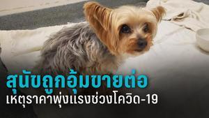 สุนัขจำนวนมากถูกขโมยไปขายต่อ หลังสุนัขราคาแพงขึ้นช่วงโควิด-19