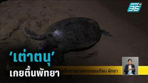 เต่าตนุ เกยตื้นพัทยา ไร้แผล ขณะที่ โลมา ร่างสะบักสะบอมเกยตื้นน้ำตายที่พังงา