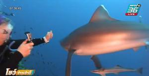 หนุ่มออสซี่ รัวหมัดต่อยฉลามขาวช่วยชีวิตภรรยา