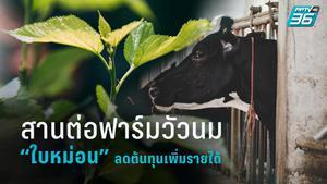 เคล็ดลับ คนรุ่นใหม่หนีโควิด-19 สานต่อฟาร์มวัวนม สร้างกำไรให้ครอบครัว