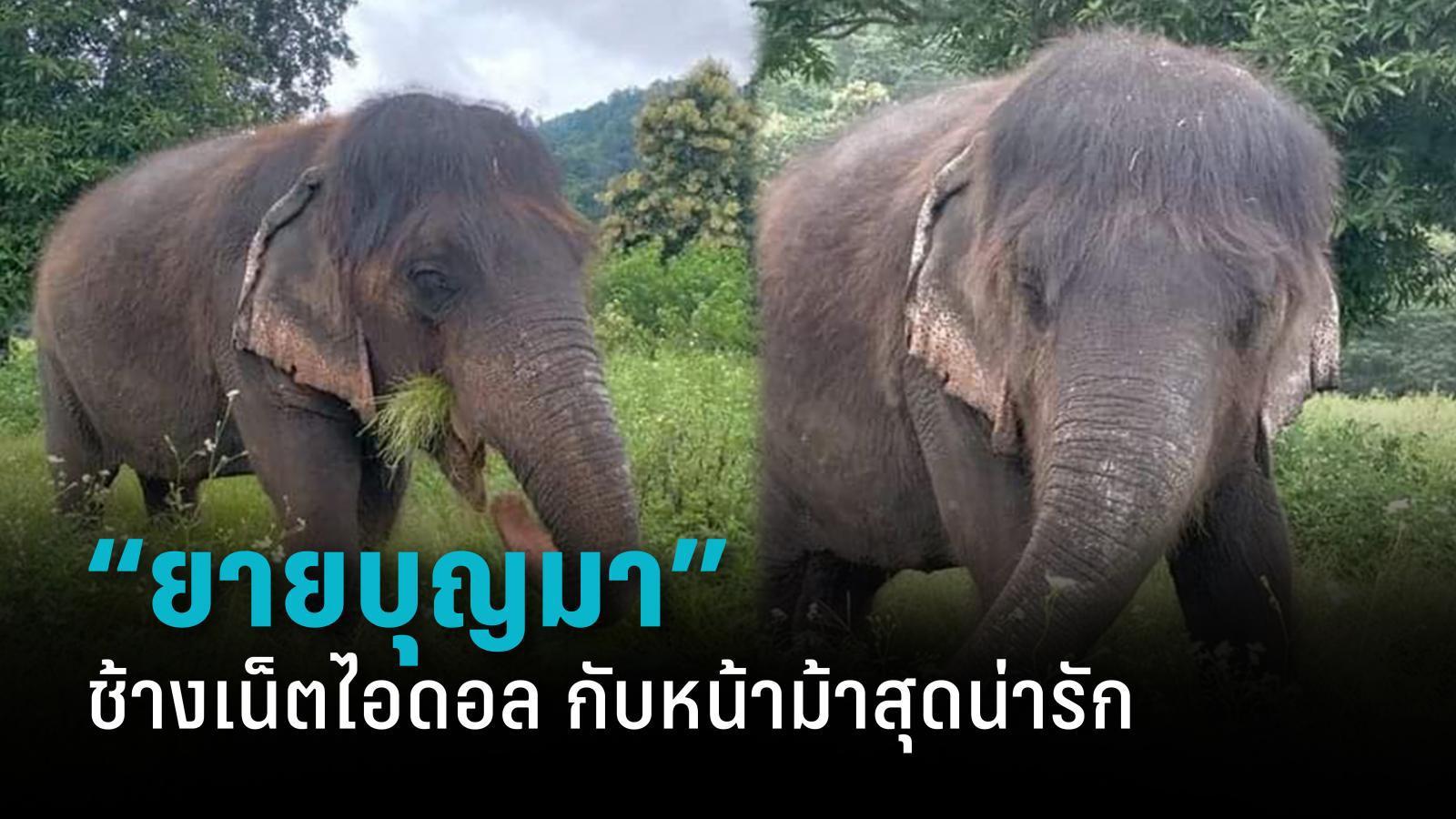 """""""ยายบุญมา"""" ช้างเน็ตไอดอลกับผมม้าสุดน่ารัก"""