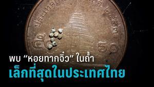 นักวิจัยพบหอยทากจิ๋วเล็กที่สุดในประเทศไทย คาดเล็กที่สุดในโลก