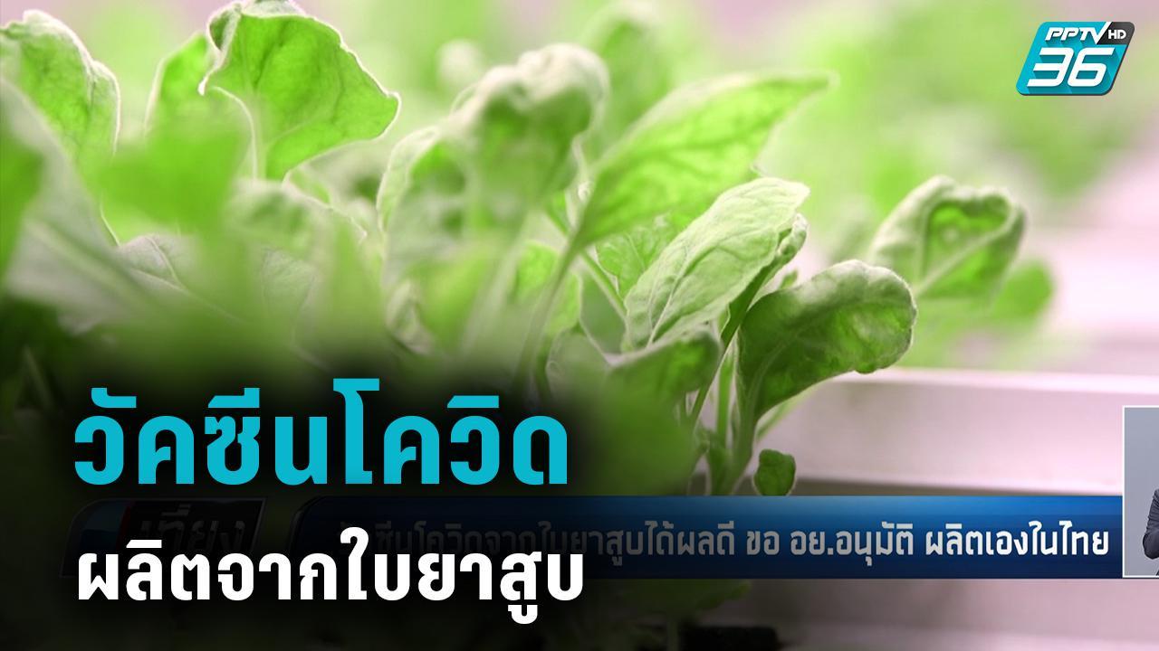 วัคซีนโควิด-19 จากใบยาสูบได้ผลดี ขอ อย.อนุมัติ ผลิตเองในไทย