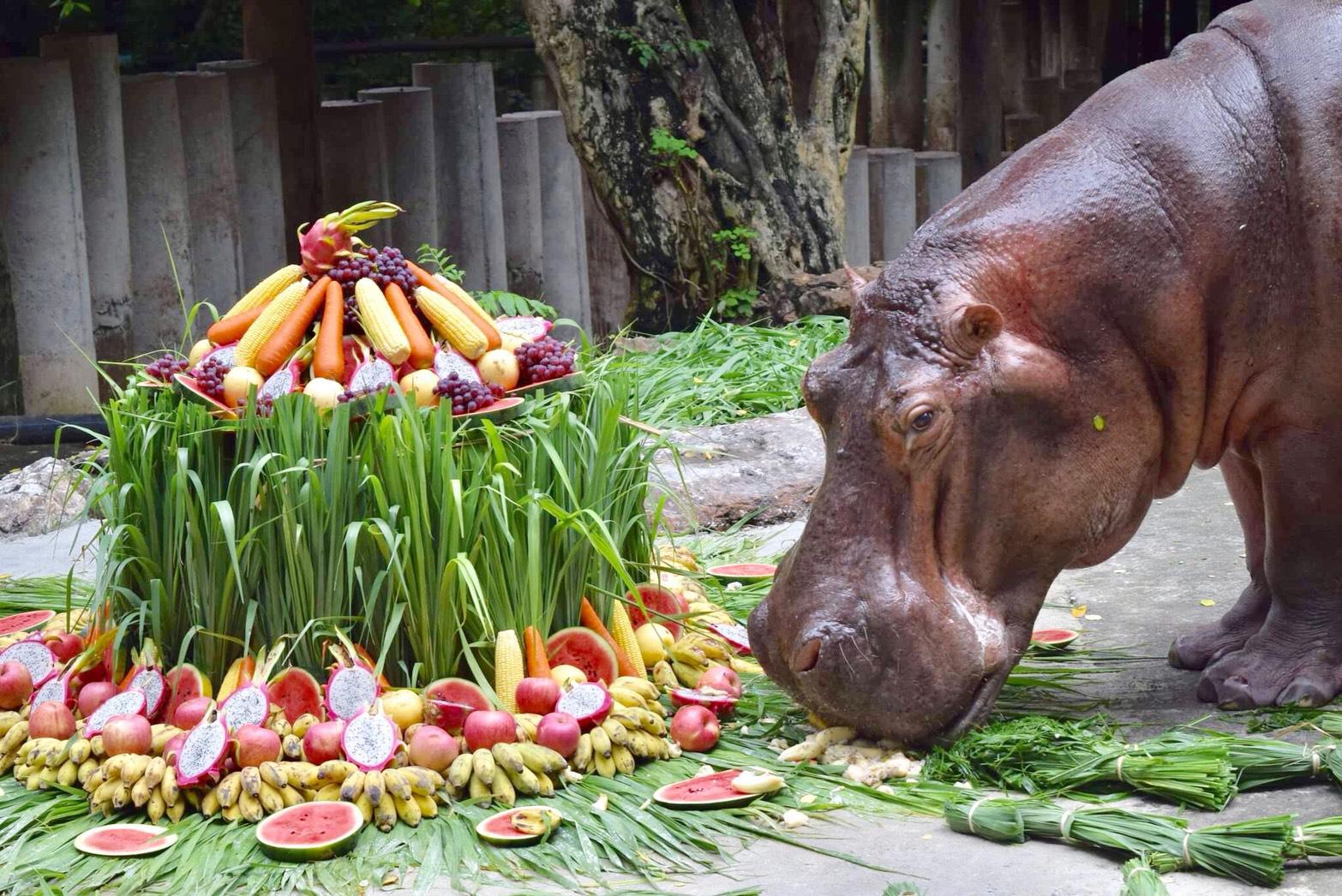 """เสิร์ฟเค้กผลไม้ยักษ์ ฉลองวันเกิด """"แม่มะลิฮิปโปโปเตมัส"""" ครบ 55 ปี"""