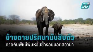 ช้างตายปริศนา ในซิมบับเว เพิ่มเป็น 22 ตัวแล้ว