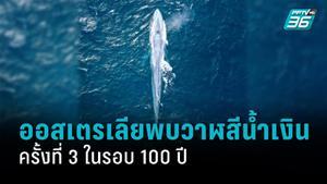 ออสเตรเลียพบวาฬสีน้ำเงิน ครั้งที่ 3 ในรอบ 100 ปี
