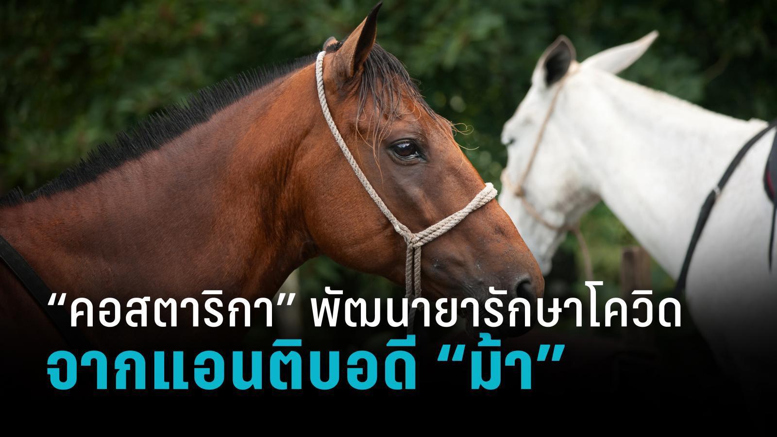 คอสตาริกาพัฒนายารักษาโควิด-19 ด้วยแอนติบอดีจากม้า
