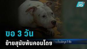 เจ้าของสุนัขพิทบลู 7 ตัว ยอมย้ายพ้นคอนโดฯ ขอเวลา 3 วัน