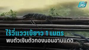 ไร้วี่แวว จระเข้ ในสระน้ำสวนสาธารณะนนทบุรี พบเพียงตัวเงินตัวทองนอนอาบแดด