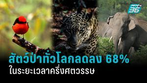 ประชากรสัตว์ป่าทั้งโลกลดลง 2 ใน 3 ในช่วงไม่ถึง 50 ปีที่ผ่านมา