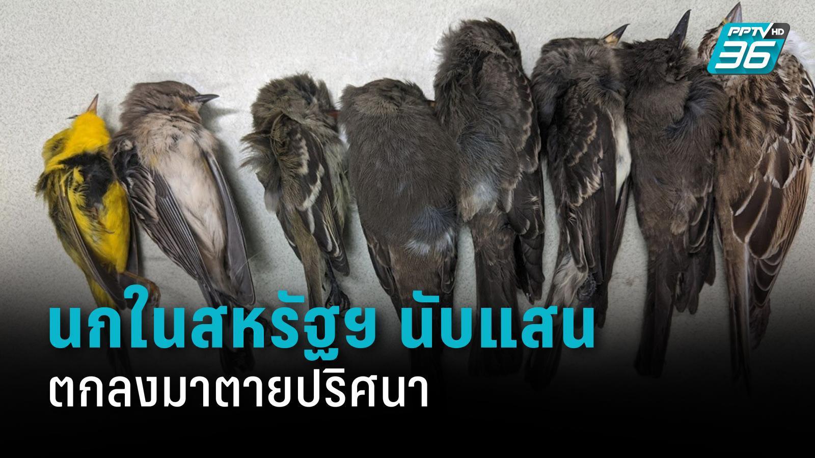 นกในสหรัฐฯ ตายปริศนานับแสนตัว เชื่อเกิดจากไฟป่าในภาคตะวันตก
