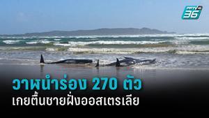 วาฬนำร่อง 270 ตัวเกยตื้นชายฝั่งรัฐแทสเมเนีย