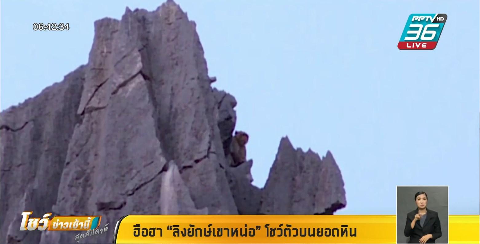 """เจอจริง !! """"พญาลิง เขาหน่อ"""" หลัง นักท่องเที่ยวแห่รอชม"""
