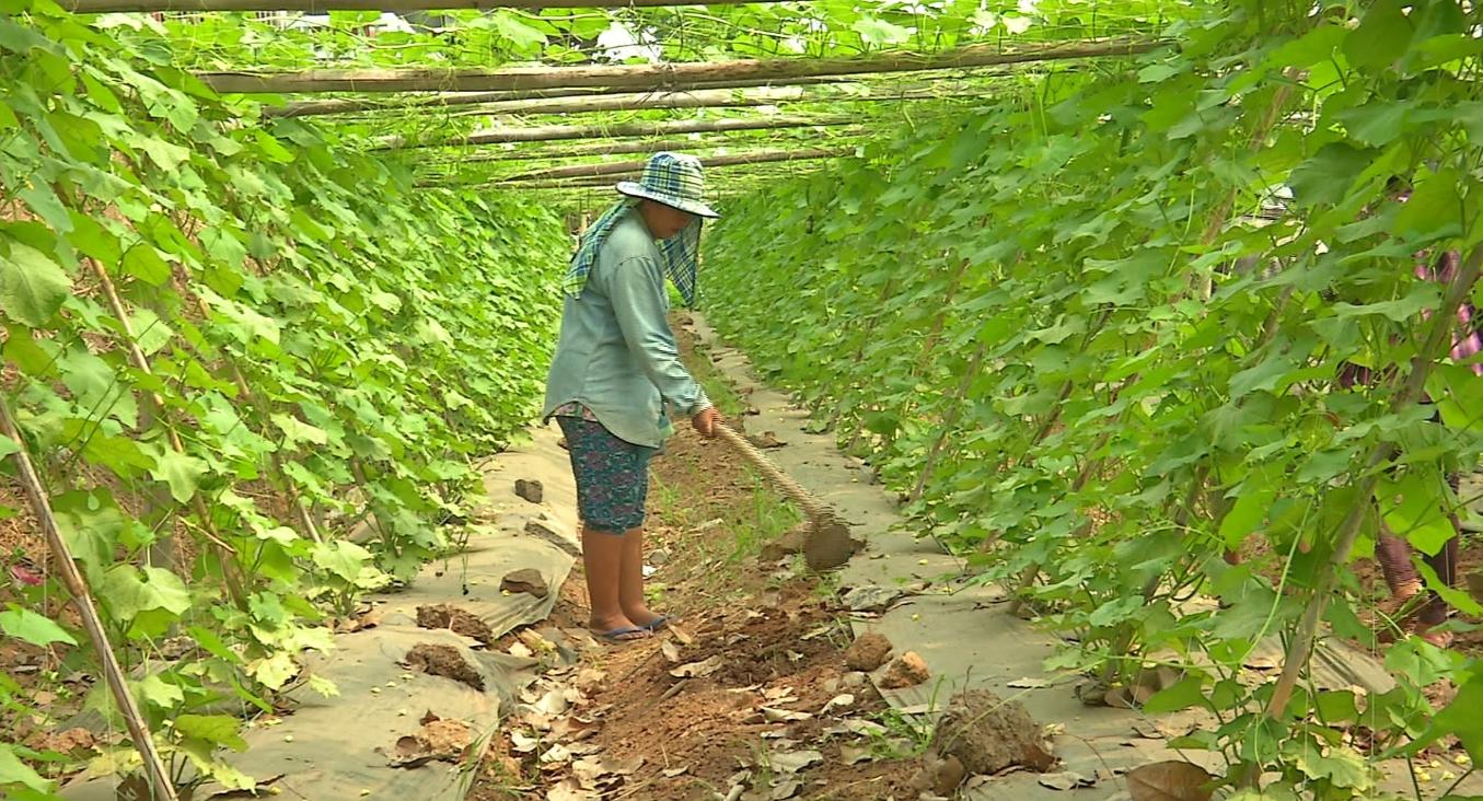 นักวิชาการ แนะ ปลูกพืชสวนแทนข้าวนาปรัง