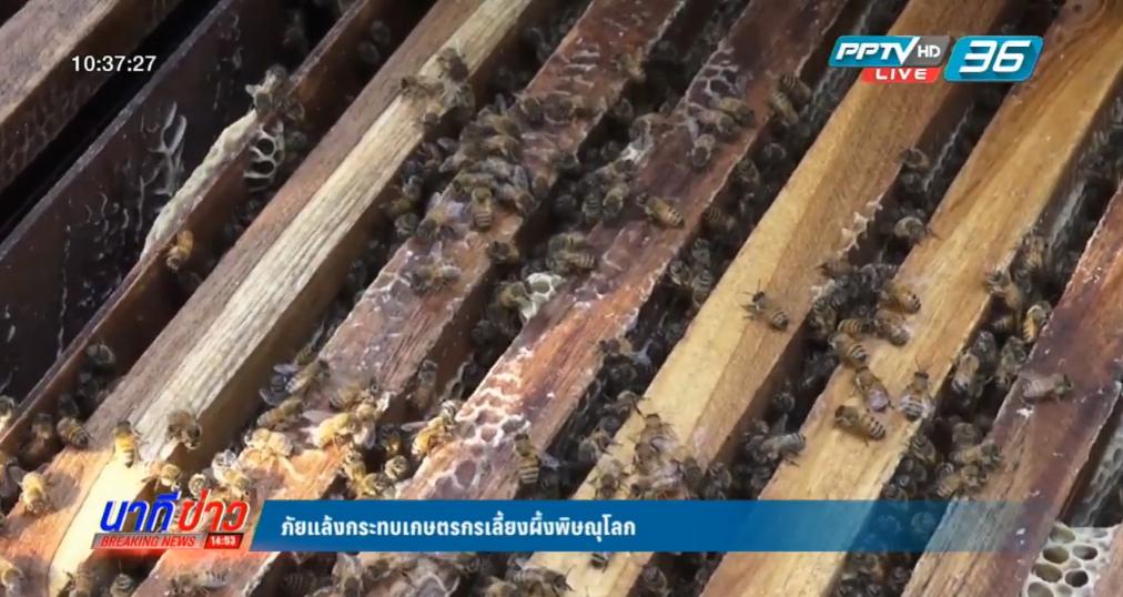 ภัยแล้งกระทบเกษตรกรเลี้ยงผึ้งพิษณุโลก