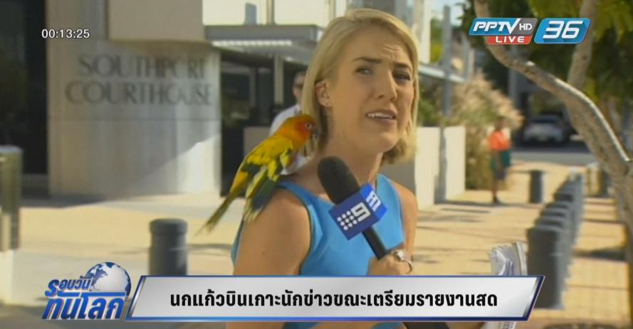 ตกใจแรง! นกแก้วบินเกาะนักข่าวขณะเตรียมรายงานสด (คลิป)