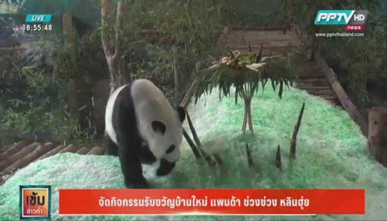 สวนสัตว์เชียงใหม่ รับขวัญบ้านใหม่ ช่วงช่วง หลินฮุ่ย