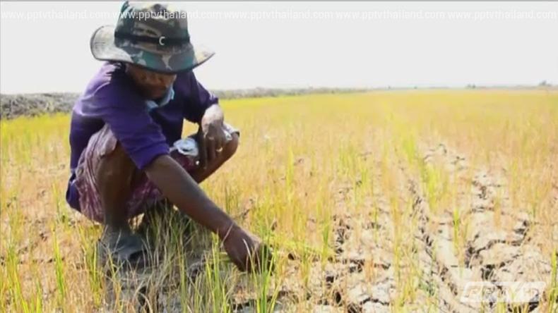 คลัง-เกษตรเตรียมหารือยกหนี้เกษตรกร