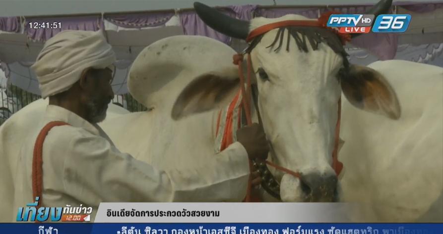 อินเดียจัดประกวดวัวสวยงาม (คลิป)