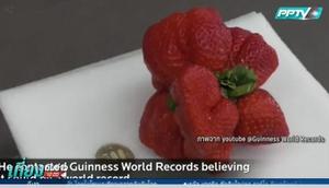 กินเนสส์บุ๊ค บันทึก 'สตรอว์เบอรรี่ญี่ปุ่น' หนักและใหญ่ที่สุดในโลก