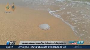 พบแมงกะพรุนบนหาดจอมเทียน นักท่องเที่ยวสัมผัสถูกบาดเจ็บ