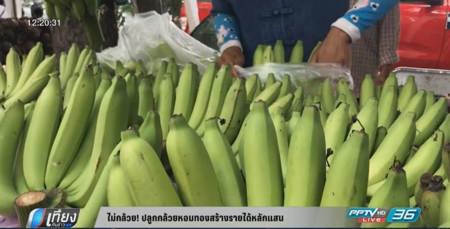 กล้วยหอมทองขายดีเพิ่มรายได้หลักแสน