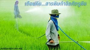 รู้หรือไม่.. เกษตรกรภาคกลาง ป่วยจากพิษสารเคมีกำจัดศัตรูพืชมากที่สุดในประเทศ !