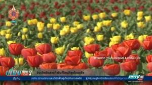 อินเดียชวนชมสวนทิวลิปนับล้านดอกเมืองศรีนคร โวใหญ่ที่สุดในเอเชีย