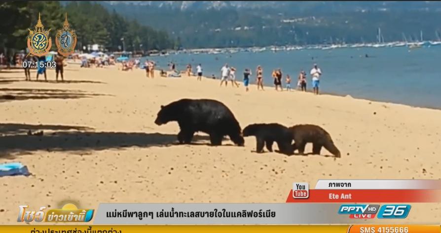 แม่หมีพาลูกๆ เล่นน้ำทะเลสบายใจในแคลิฟอร์เนีย (คลิป)