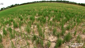"""ก.เกษตรฯ เตรียมออกหลักเกณฑ์ชดเชย """"พืชสวนไร่นา"""" เสียหายจากภัยแล้ง"""