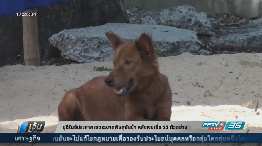 บุรีรัมย์ประกาศเขตระบาดพิษสุนัขบ้า หลังพบเชื้อ 23 ตัวอย่าง