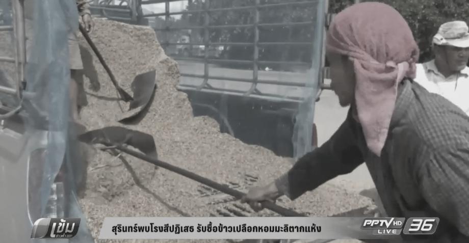 สุรินทร์พบโรงสีปฏิเสธ รับซื้อข้าวเปลือกหอมมะลิ ตากแห้งลดความชื้น (คลิป)