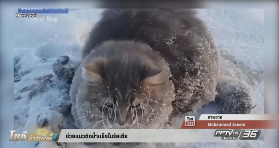ช่วยแมวติดน้ำแข็งในรัสเซีย (คลิป)