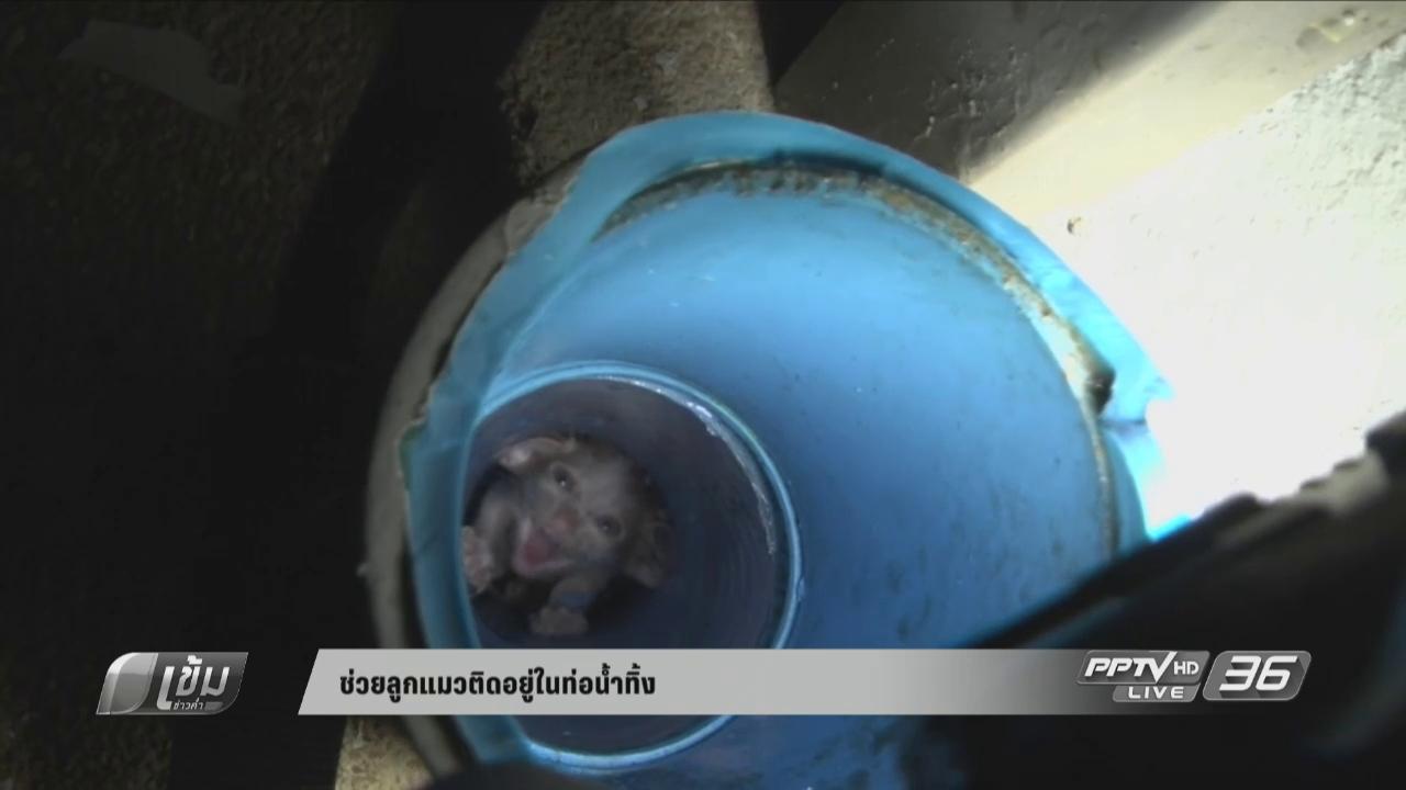 ช่วยลูกแมวติดอยู่ในท่อน้ำทิ้ง นานกว่า 2 วัน