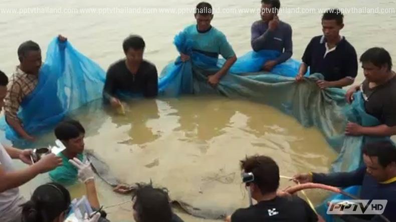 ปล่อยแล้ว! ชาวบ้านอ่างทองช่วยกันส่งปลากระเบนราหูตัวยักษ์คืนสู่ธรรมชาติ