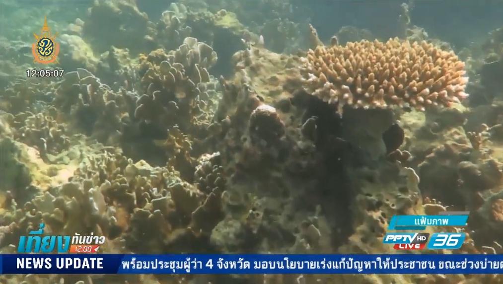 สถานการณ์ปะการังฟอกขาววิกฤติหนัก !