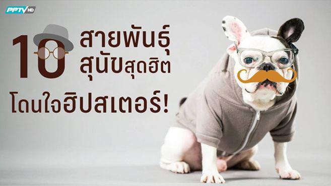 10 สายพันธุ์สุนัขสุดฮิตโดนใจฮิปสเตอร์