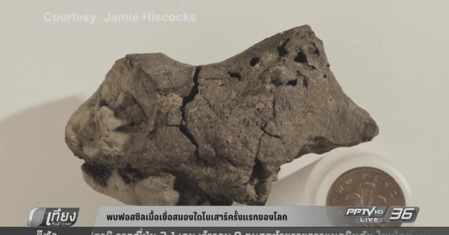 พบฟอสซิลเนื้อเยื่อสมองไดโนเสาร์ครั้งแรกของโลก (คลิป)
