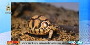 เต่ามาดากัสการ์หายาก หายจากสถานีเพาะเลี้ยงบางพระ (คลิป)