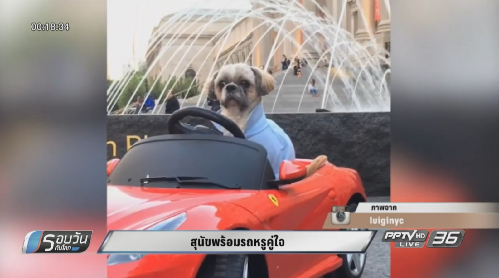 สุนัขพร้อมรถหรูคู่ใจ