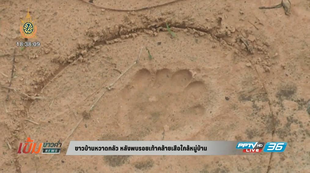 ชาวบ้านหวาดกลัว หลังพบรอยเท้าคล้ายเสือใกล้หมู่บ้าน