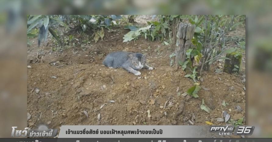 เจ้าแมวซื่อสัตย์ นอนเฝ้าหลุมศพเจ้าของเป็นปี